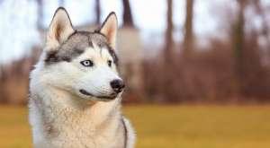 如果每天不遛狗会给狗狗带来哪些伤害