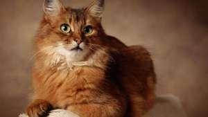 母猫绝育后的护理